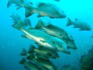 Asisbiz Dive 16 Philippines Mindoro Sabang hole in the wall Mar 2006 29