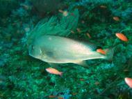 Asisbiz Dive 16 Philippines Mindoro Sabang hole in the wall Mar 2006 33