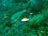 Asisbiz Dive 16 Philippines Mindoro Sabang hole in the wall Mar 2006 35
