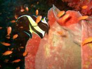 Asisbiz Dive 16 Philippines Mindoro Sabang hole in the wall Mar 2006 36