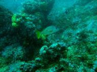 Asisbiz Dive 16 Philippines Mindoro Sabang hole in the wall Mar 2006 37