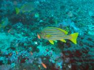 Asisbiz Dive 17 Philippines Mindoro Sabang Fish Bowl Oct 2005 04