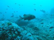 Asisbiz Dive 17 Philippines Mindoro Sabang Fish Bowl Oct 2005 08