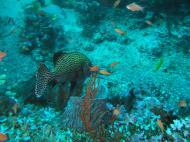 Asisbiz Dive 17 Philippines Mindoro Sabang Fish Bowl Oct 2005 09