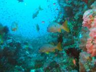 Asisbiz Dive 17 Philippines Mindoro Sabang Fish Bowl Oct 2005 11