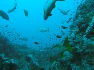 Asisbiz Dive 17 Philippines Mindoro Sabang Fish Bowl Oct 2005 12