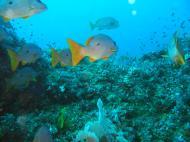 Asisbiz Dive 17 Philippines Mindoro Sabang Fish Bowl Oct 2005 13