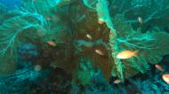 Asisbiz Dive 17 Philippines Mindoro Sabang Fish Bowl Oct 2005 15