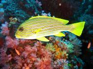 Asisbiz Dive 17 Philippines Mindoro Sabang Fish Bowl Oct 2005 17