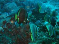 Asisbiz Dive 17 Philippines Mindoro Sabang Fish Bowl Oct 2005 19