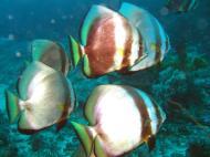 Asisbiz Dive 17 Philippines Mindoro Sabang Fish Bowl Oct 2005 20