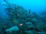 Asisbiz Dive 17 Philippines Mindoro Sabang Fish Bowl Oct 2005 21