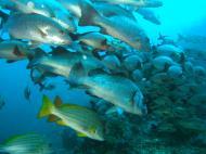 Asisbiz Dive 17 Philippines Mindoro Sabang Fish Bowl Oct 2005 23