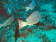 Asisbiz Dive 17 Philippines Mindoro Sabang Fish Bowl Oct 2005 26