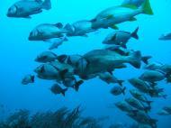 Asisbiz Dive 17 Philippines Mindoro Sabang Fish Bowl Oct 2005 27