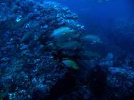 Asisbiz Dive 18 Philippines Mindoro Sabang Canyons July 2005 07