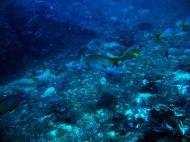 Asisbiz Dive 18 Philippines Mindoro Sabang Canyons July 2005 14