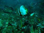 Asisbiz Dive 18 Philippines Mindoro Sabang Canyons July 2005 18