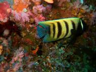 Asisbiz Dive 18 Philippines Mindoro Sabang Canyons Nov 2005 04