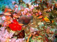 Asisbiz Dive 18 Philippines Mindoro Sabang Canyons Nov 2005 06