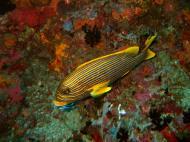 Asisbiz Dive 18 Philippines Mindoro Sabang Canyons Nov 2005 09