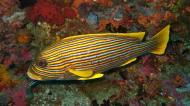 Asisbiz Dive 18 Philippines Mindoro Sabang Canyons Nov 2005 12