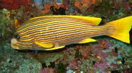 Asisbiz Dive 18 Philippines Mindoro Sabang Canyons Nov 2005 14