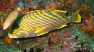 Asisbiz Dive 18 Philippines Mindoro Sabang Canyons Nov 2005 15