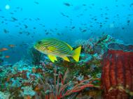 Asisbiz Dive 18 Philippines Mindoro Sabang Canyons Nov 2005 18