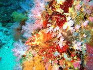 Asisbiz Dive 18 Philippines Mindoro Sabang Canyons Nov 2005 21