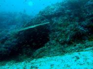 Asisbiz Dive 18 Philippines Mindoro Sabang Canyons Nov 2005 22