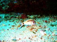 Asisbiz Dive 18 Philippines Mindoro Sabang Canyons Nov 2005 23