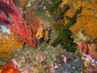 Asisbiz Dive 18 Philippines Mindoro Sabang Canyons Nov 2005 25