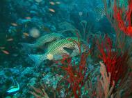 Asisbiz Dive 18 Philippines Mindoro Sabang Canyons Nov 2005 26