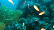 Asisbiz Dive 18 Philippines Mindoro Sabang Canyons Nov 2005 34