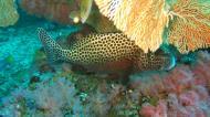 Asisbiz Dive 18 Philippines Mindoro Sabang Canyons Nov 2005 35