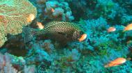 Asisbiz Dive 18 Philippines Mindoro Sabang Canyons Nov 2005 36