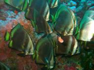Asisbiz Dive 18 Philippines Mindoro Sabang Canyons Nov 2005 43