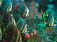 Asisbiz Dive 18 Philippines Mindoro Sabang Canyons Nov 2005 44