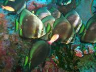 Asisbiz Dive 18 Philippines Mindoro Sabang Canyons Nov 2005 46