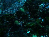 Asisbiz Dive 19 Philippines Mindoro Sabang Horsehead July 2005 16