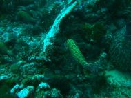 Asisbiz Dive 19 Philippines Mindoro Sabang Horsehead July 2005 22
