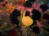 Asisbiz Dive 20 Philippines Mindoro Sabang Shark Cave Oct 2005 01