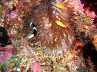 Asisbiz Dive 20 Philippines Mindoro Sabang Shark Cave Oct 2005 02