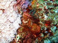 Asisbiz Dive 20 Philippines Mindoro Sabang Shark Cave Oct 2005 07