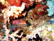 Asisbiz Dive 20 Philippines Mindoro Sabang Shark Cave Oct 2005 08