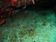 Asisbiz Dive 20 Philippines Mindoro Sabang Shark Cave Oct 2005 10