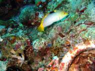 Asisbiz Dive 20 Philippines Mindoro Sabang Shark Cave Oct 2005 15
