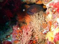 Asisbiz Dive 20 Philippines Mindoro Sabang Shark Cave Oct 2005 17