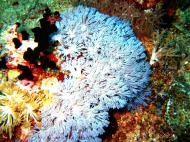 Asisbiz Dive 20 Philippines Mindoro Sabang Shark Cave Oct 2005 19